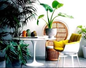 """5 Причин """"завести"""" кімнатні рослини фото"""