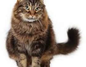 Алергія на кішку, симптоми захворювання фото