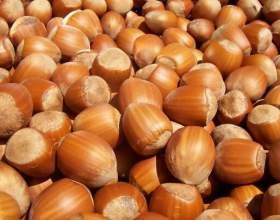 Чим корисний горіх фундук: один з головних горіхів людства фото