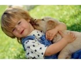 Чим керуватися, якщо ви хочете завести для дитини тварина? фото