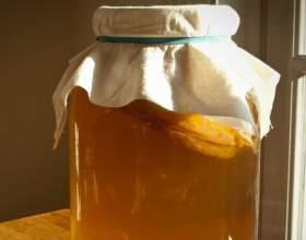 Що лікує чайний гриб: повне знищення бактерій фото