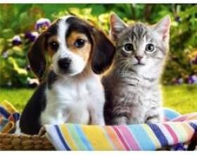 Що краще кішка або собака? фото