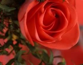 Азбука квітів: які квіти подарувати фото