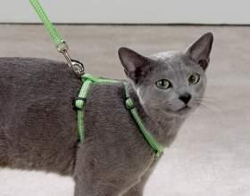 Що таке шлейки для кішок, навіщо вона потрібна і як нею правильно користуватися фото