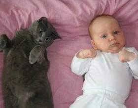 Домашня тварина і малюк в одному будинку фото