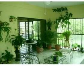 Фен-шуй і кімнатні рослини фото