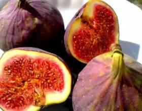 Інжир - корисні властивості винної ягоди фото