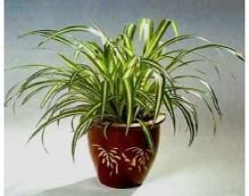 Як домашні рослини впливають на наше життя? фото