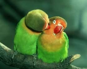 Як можна довести любов: поводься гідно фото