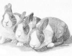 Як намалювати кролика поетапно. Як намалювати кролика олівцем фото
