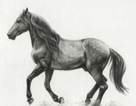 Як намалювати коня: чи зможе кожен! фото