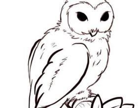 Як намалювати сову олівцем? фото