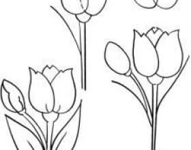 Як намалювати тюльпан? Інструкція для тих, хто тільки починає малювати фото