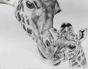 Як намалювати жирафа олівцем? фото