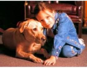 Як навчити дитину правильно спілкуватися з собакою фото