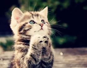 Як підібрати ім'я для кішки фото