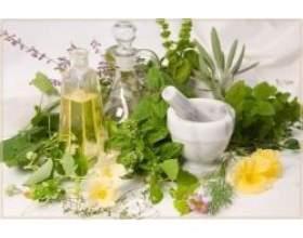 Як правильно заготовлювати лікарські рослини фото