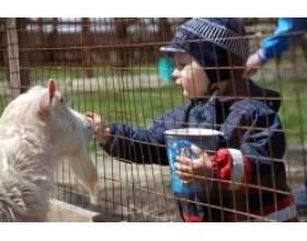 Як розповідати дитині про тварин фото