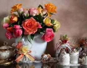 Як доглядати за трояндою в горщику в домашніх умовах? фото