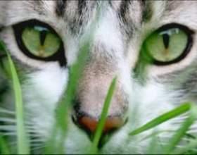 Як бачать кішки навколишній світ? фото