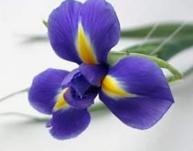 Квіти для чоловіків: дарують чи? фото