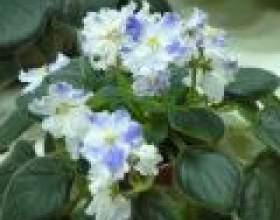 Які рослини сприятливо вирощувати вдома фото