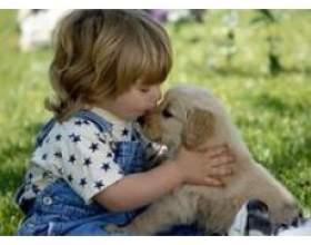 Яке домашня тварина купити дитині? фото