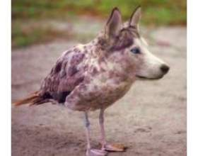 Яка тварина можна завести вдома? фото