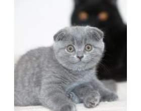 Яку породу кішок вибрати для дитини? фото