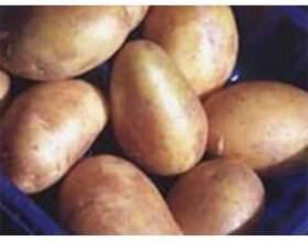 Картопляна дієта і її корисність фото