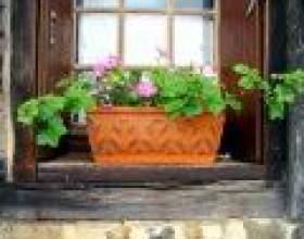 Квіти в будинку фото