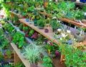 Корисні кімнатні рослини фото