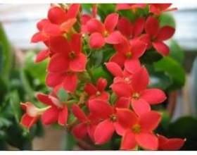 Кімнатні рослини корисні фото