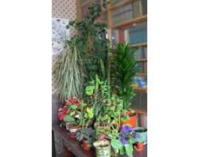 Кімнатні рослини види і догляд фото