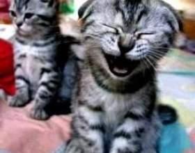 Кішка чхає - що робити? фото