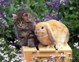 Як рік кішки відіб'ється на різних знаках зодіаку фото