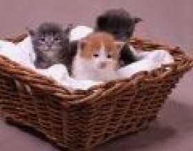 Як кішки лікують людей фото