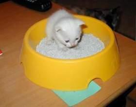 Маленький клубочок в будинку: як привчити кошеня до лотка фото