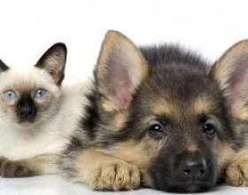 Методи рішення статевого питання у собак і кішок фото