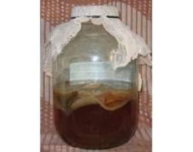 Народна медицина: чайний гриб фото