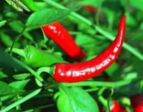 Червоний перець як складовий компонент масок для волосся фото