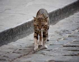 Про те, скільки живуть кішки з нами і без нас фото
