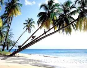 Острів барбадос - для душі і тіла фото