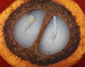 Пальмова олія: шкода і користь від застосування фото