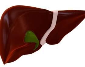 Печінка яловича. Користь для здоров'я фото