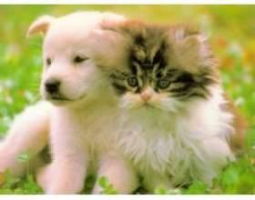 Чому люди заводять домашніх тварин? фото