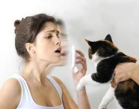 Чому виникає алергія на кішок? фото