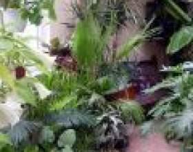 Підбираємо кімнатні рослини з енергетики фото