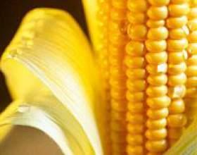 Поговоримо про лікувальні властивості кукурудзи фото