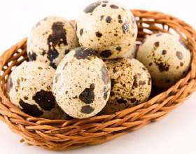 Корисні властивості перепелиних яєць: найцінніший продукт фото